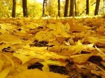 O amarelo do parque do outono deixa a folha do céu Imagens de Stock Royalty Free
