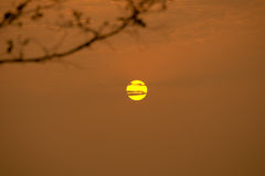 O amarelo do sol Foto de Stock Royalty Free