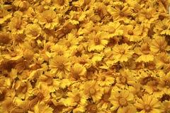 O amarelo dourado floresce o fundo Imagens de Stock Royalty Free
