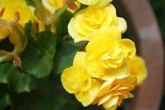 O amarelo floresce o fundo fotos de stock