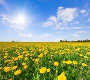 O amarelo floresce o monte sob o céu nebuloso azul imagens de stock