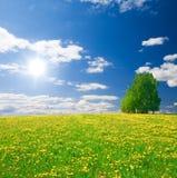 O amarelo floresce o monte sob o céu nebuloso azul imagem de stock royalty free