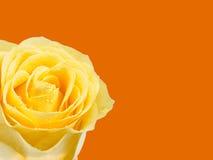 O amarelo levantou-se na laranja Fotos de Stock Royalty Free