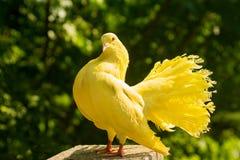 O amarelo mergulhou na floresta fotografia de stock