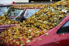O amarelo sae na capa e no para-brisa do carro Fotos de Stock Royalty Free