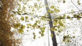 O amarelo sae na floresta com os sons da natureza video estoque