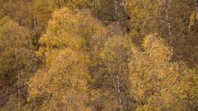 O amarelo sae no outono dourado das árvores nas montanhas do Cáucaso filme