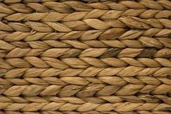 O amarelo torcido planta a textura Imagem de Stock