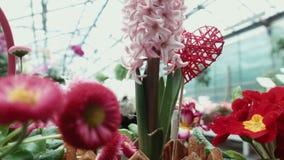 O amor da palavra em uma flor na estufa video estoque