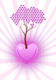 O amor está crescendo Fotografia de Stock