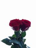 O amor está toda ao redor Imagem de Stock Royalty Free