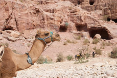 O anúncio-Deir do monastério, PETRA antigo da cidade de Nabataean, Jordânia Templo antigo em PETRA Foto de Stock Royalty Free