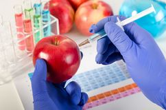 O analista injeta o líquido na maçã Conceito Genetically modificado do alimento fotos de stock
