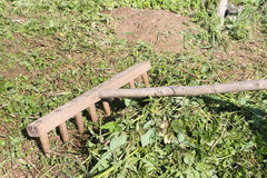 O ancinho velho de madeira que limpa uma grama segada Fotografia de Stock Royalty Free
