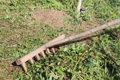 O ancinho velho de madeira que limpa uma grama segada Foto de Stock Royalty Free