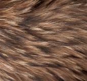 O animal caiu textura fotos de stock royalty free