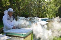 O apiarist superior experiente está ajustando um fogo em um fumador da abelha fotografia de stock royalty free