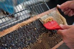 O apicultor durante a extração do mel do favo de mel foto de stock