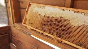 O apicultor est? trabalhando com abelhas e colmeias no api?rio vídeos de arquivo