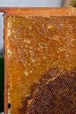 O apicultor que verifica o quadro do favo de mel Fotografia de Stock Royalty Free