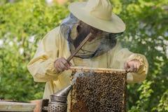 O apicultor trabalha em uma colmeia - adiciona quadros fotografia de stock royalty free