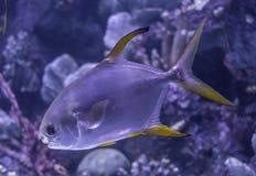 O aquário colorido de Antalya, Turquia fotografia de stock royalty free