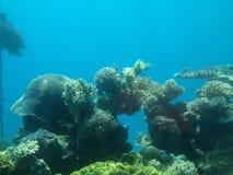 O aquário de Eilat Fotografia de Stock Royalty Free