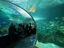 O aquário de Ripley em Toronto Fotografia de Stock