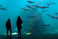 O aquário em Alesund, Noruega fotos de stock royalty free