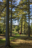 O arboreto de Yorkshire - Inglaterra Foto de Stock Royalty Free