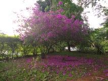 O arbusto Foto de Stock