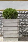 O arbusto verde bonito no vaso de flores de madeira vale como um Orn Fotos de Stock Royalty Free