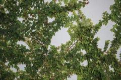 O arbusto verde cresce em um muro de cimento Folhas do verde no fundo do muro de cimento imagens de stock royalty free
