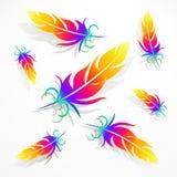 o arco-íris empluma-se com sombras em uma luz - fundo cinzento Imagens de Stock Royalty Free