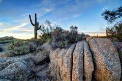 O Arizona Desertscape Fotos de Stock