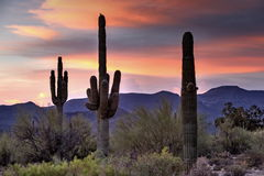 O Arizona Desertscape Imagem de Stock