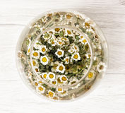 O arranjo com margarida floresce na bacia de vidro com água Fotos de Stock