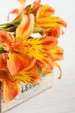 O arranjo do lírio alaranjado floresce na caixa de madeira Fotografia de Stock Royalty Free