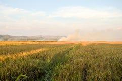 O arroz coloca o cenário Foto de Stock Royalty Free
