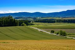 O arroz coloca em Biei na opinião panorâmico da estrada, Hokkaido, imagens de stock