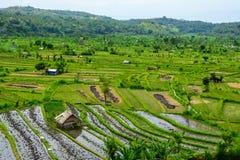 O arroz coloca em Karangasem, Bali, Indonésia fotos de stock