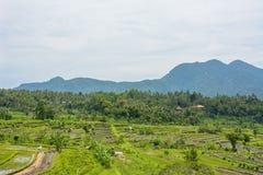O arroz coloca em Karangasem, Bali, Indonésia fotografia de stock royalty free