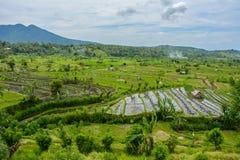 O arroz coloca em Karangasem, Bali, Indonésia foto de stock
