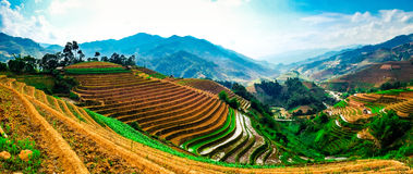 O arroz coloca em terraços na plantação em Vietname Imagem de Stock Royalty Free