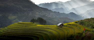 O arroz coloca em terraced de MU Cang Chai Fotografia de Stock Royalty Free