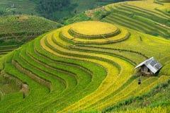 O arroz coloca em terraced de MU Cang Chai, Yen Bai, Vietname imagens de stock royalty free
