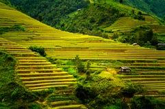 O arroz coloca em terraced de MU Cang Chai, YenBai, Vietname Imagem de Stock