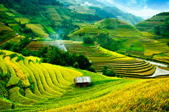 O arroz coloca em terraced de MU Cang Chai, YenBai, Vietname Fotografia de Stock