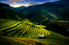 O arroz coloca em terraced de MU Cang Chai, YenBai, Vietname Fotografia de Stock Royalty Free