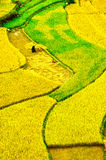 O arroz coloca em terraced de MU Cang Chai, YenBai, Vietname Fotos de Stock